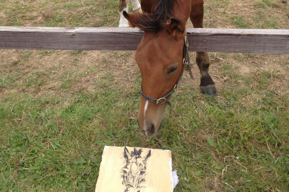 Inspecting my portrait at Laundry Cottage Stud